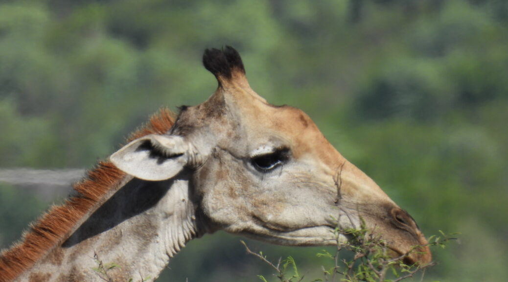Südafrika Kruger National Park
